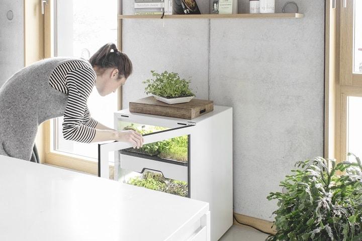 agrilution plantcube ernte zuhause