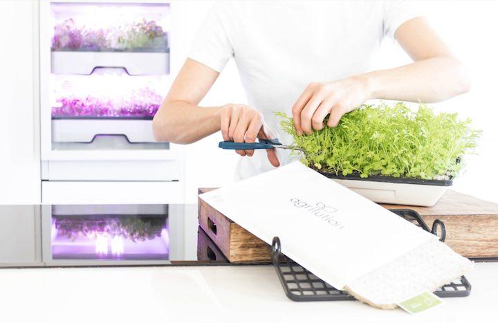 plantcube kräuter salate microgreens